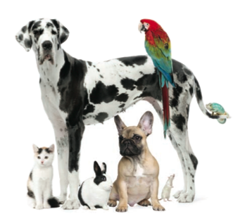Pet Restrictions in Condominiums